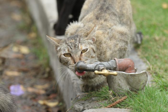 colonia de gatos cementerio guayaquil