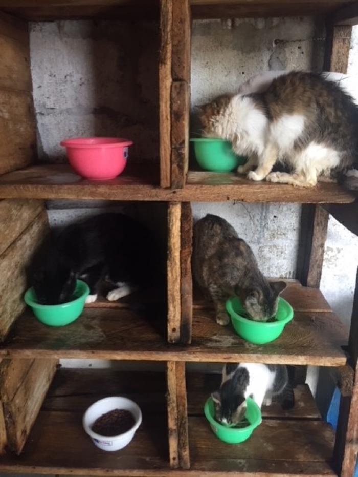 cada gatito tiene su espacio para servirse sus alimentos.