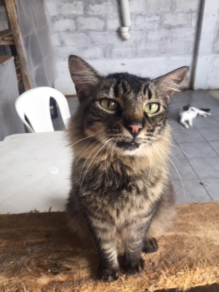 Uno de los 80 gatos del refugio.