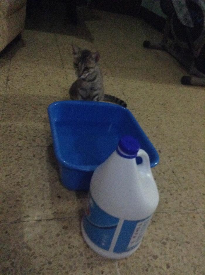 Mascotas-Riesgos-Cloro