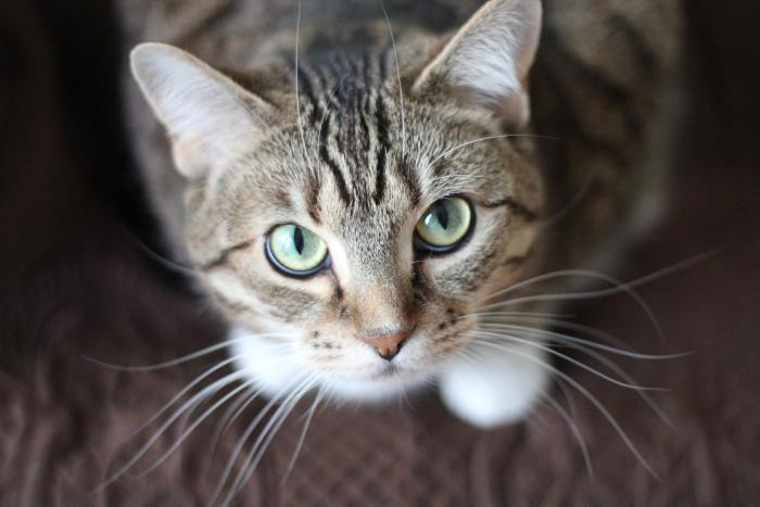 Gato. Foto Pexels. 11 de junio de 2020.