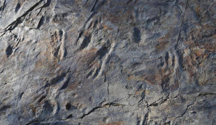 huellas-cocodrilo-prehistorico