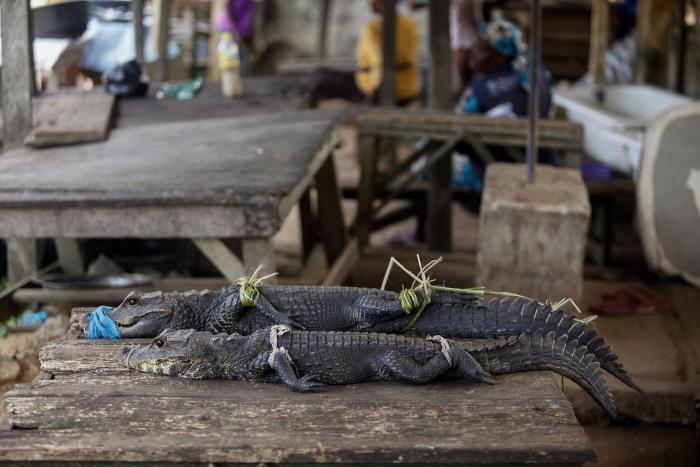 Denuncia_Fauna salvaje_WWF_Asia