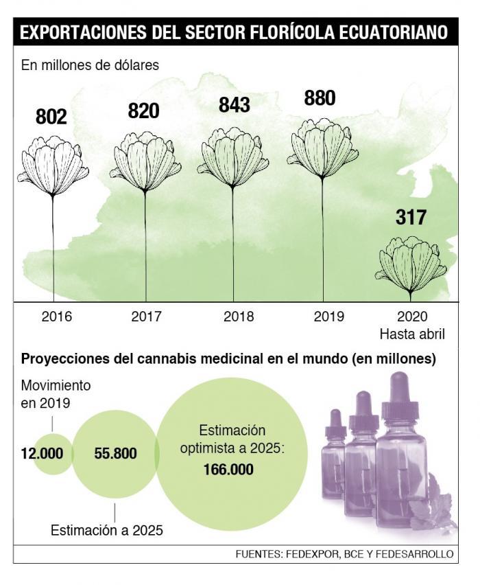 Infografía sector floricultor. Flores.
