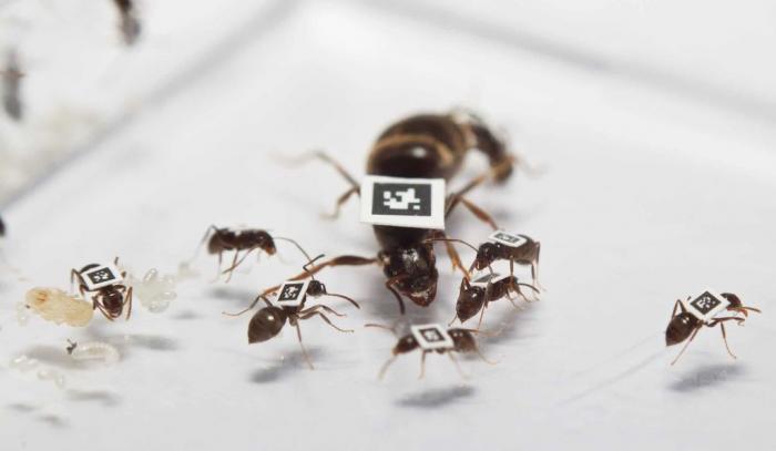 hormigas-estudio