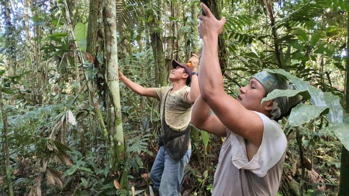 foto selva