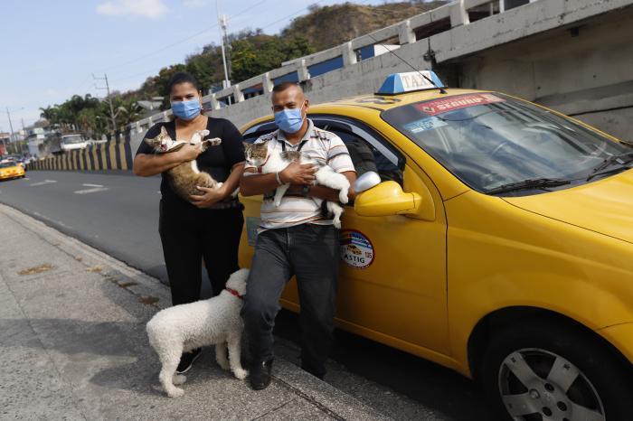 GATOS Y PERROS VIAJERO(32278075)