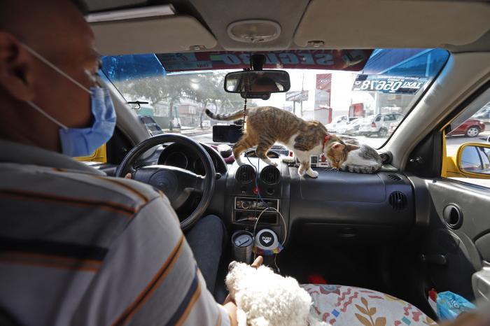 gatos en el taxi