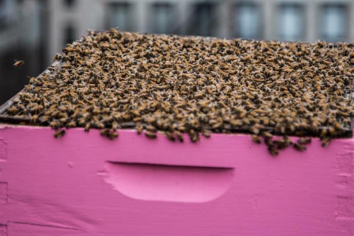 abejas-nueva-york-vecinas
