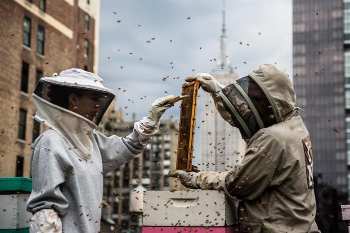 andrews-honey-abejas-nueva-york-vecinas