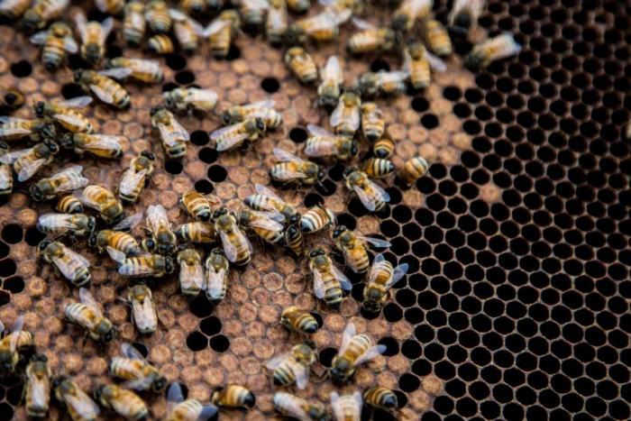 andrews-honey-abejas-nueva-york-pandemia