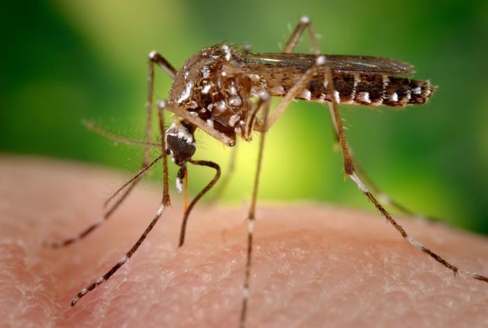 Salud_Mosquitos_Investigación