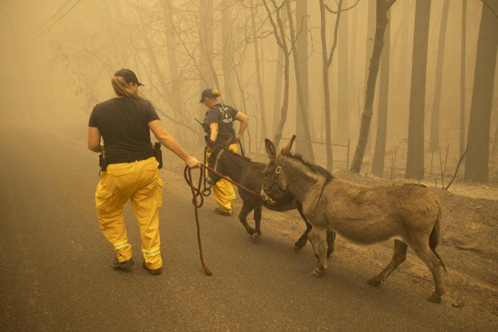 Estados Unidos_California_Incendios