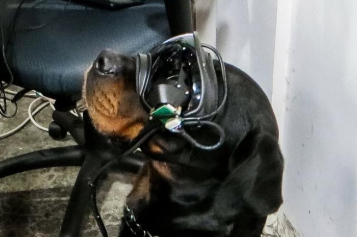 perros gafas ar ejercito eeuu