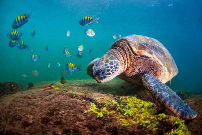 Planeta-Vivo-2020-Foto-Antonio-Busiello-WWF-US-768x512