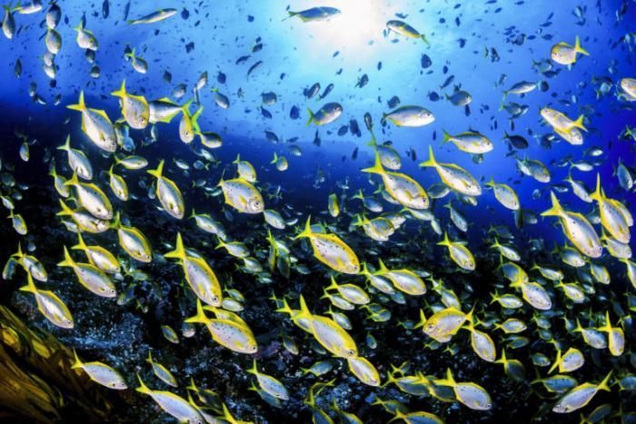 ESM5171-Oceana-Eduardo-Sorensen-Islas-Desventuradas-768x512