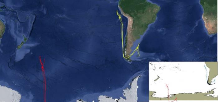 pesca-barcos-chinos-peru-ecuador
