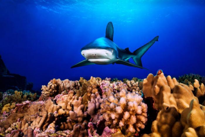 Sorensen-Melimoyu-foto-mar-vida-marina-animales