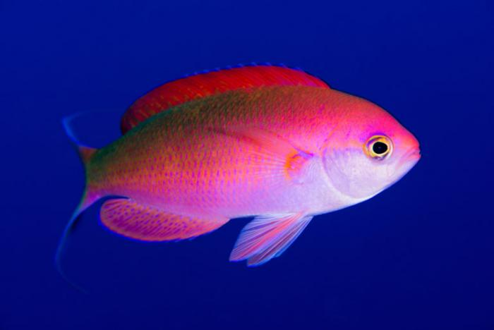 MERI-Sorensen-Melimoyu-foto-mar-vida-marina-animales