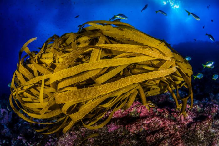 Islas-Desventuradas-foto-mar-vida-marina-animales
