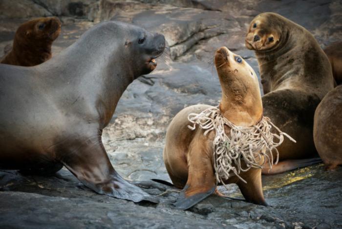 Oceana-Sorensen-Islas-Desventuradas-foto-mar-vida-marina-animales-naturaleza