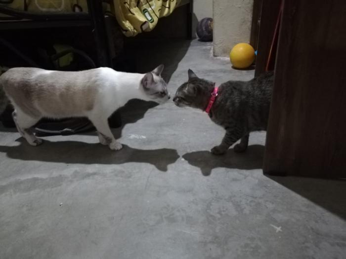 Mascotas_Gatos_2020