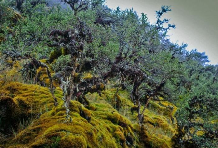 cusco-peru-turismo-Bosques-de-queunas-guillermo-reno