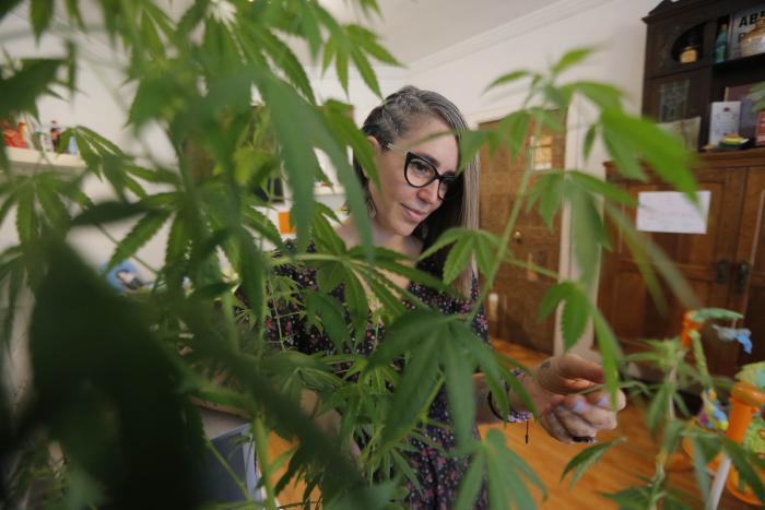 Tener acceso real al cannabis medicinal y legalizar su autocultivo son los reclamos de pacientes con dolencias crónicas en Perú, donde el debate sobre las políticas públicas de drogas, relegado durante décadas, se recrudeció tras las polémicas declaracion