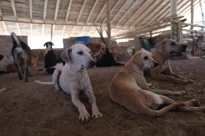 Perros rescatados del santuario