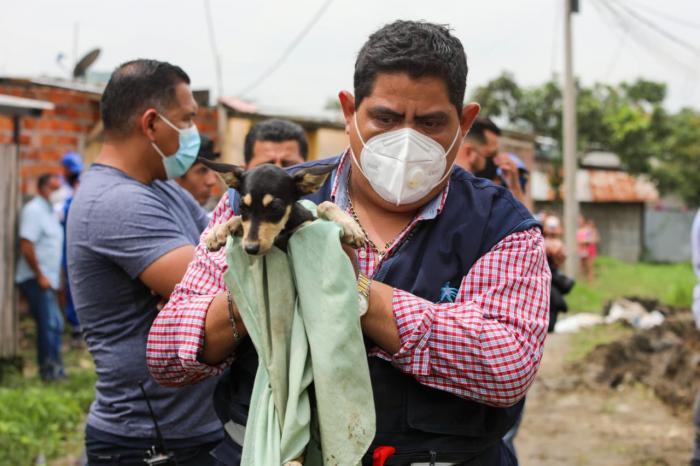 rescate de perro