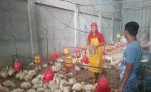 Industria avícola