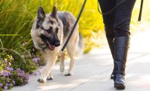 Beneficios de tener perro
