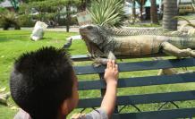 parque de las iguanas descuido animales guayaquil