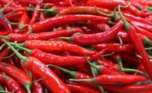 chili-pepper-3923393_960_720