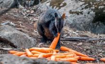 animales australia-2