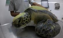 tortuga-marina-plasticos-rescate-argentina