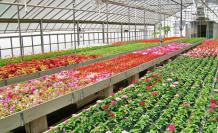 floricultura-9