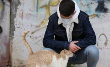 Los gatos son una especie más susceptible al coronavirus. Foto: Pixabay. Fecha de uso: 8 de mayo.