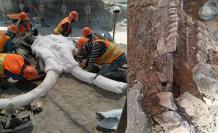 mamuts-mexico-record