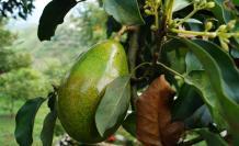 Se derogó norma para la importación de frutos sin requisitos fitosanitarios. Foto: Pixabay. 22 de mayo de 2020.
