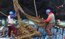 Plantado de atún