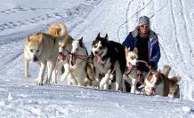 perros-trineos-siberianos-historia