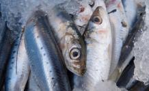 sardinas-comida-animales