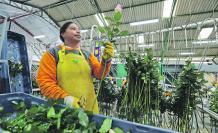 Floricultura en Ecuador