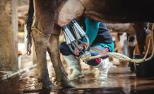 leche+bajas ventas+sector ganadero