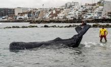 Surfistas y policías salvan a ballena varada en playa de Lima