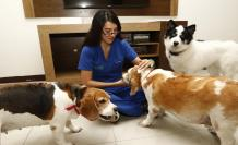 Para tranquilizar a los animales la noche del 31 de diciembre, en Ceibos Animal Care los cuidadores permanecen junto a ellos todo el tiempo.