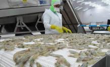 El camarón ecuatoriano es uno de los productos con mayor prestigio a nivel global.
