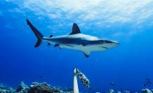 tiburon-arrecife