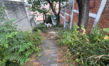 escalinatas de Lomas  (32141077)